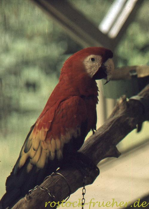 102-zoo