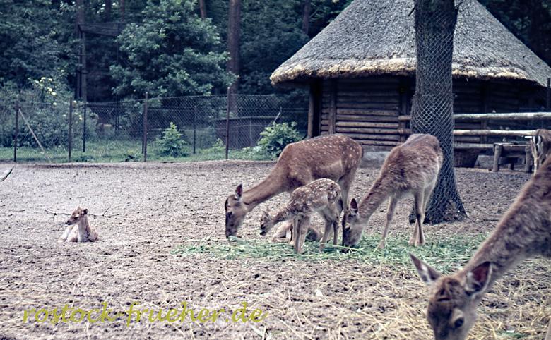 168-zoo